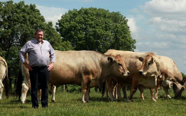 Francis Donohue with some of the Aubrac herd he has bred on his Co Westmeath farm.