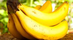 A new disease is spreading through the world's largest banana plantations.