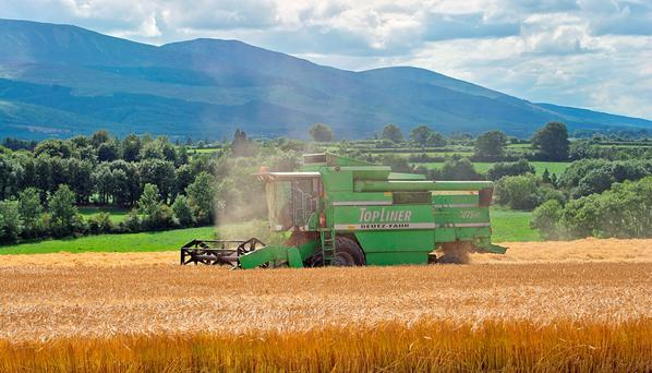 There has been criticism of the delay in reaching a deal for malting barley contracts.