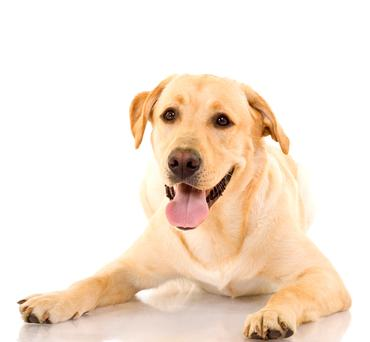 Some of us are more likely to respond to a dog in distress than aid a fellow human