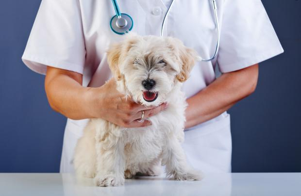A visit to the vet isn't cheap, but the quality of care is second to none.