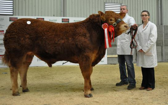John McInerney and his daughter Jean with the Junior Champion bull, Drummin Jameson, sold for the top price of €9,500 at the Irish Limousin Society Bull Show and Sale at Roscrea.