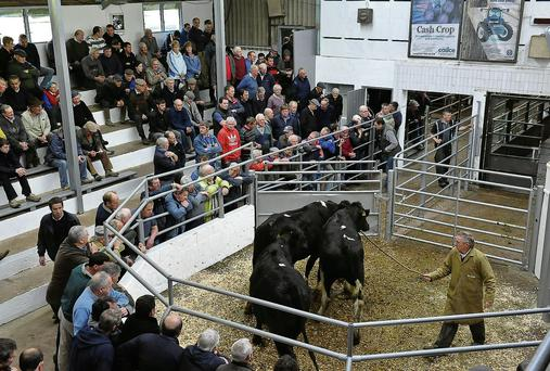 Bandon Mart had record entries in their late February sales.