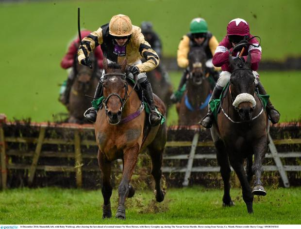 Shaneshill is a contender for the JLT Novice Chase on St Patrick's Day