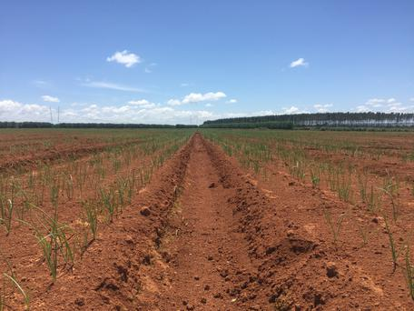 Brazil - endless acres of quality land.