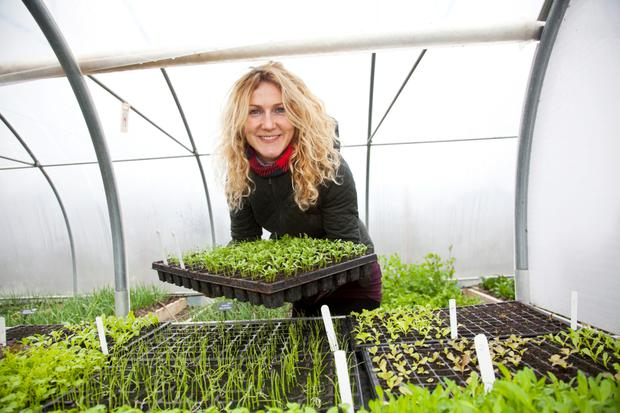 Kitty Scully, the kitchen gardener, tending the plants at the Airfield Estate farm in Dundrum.