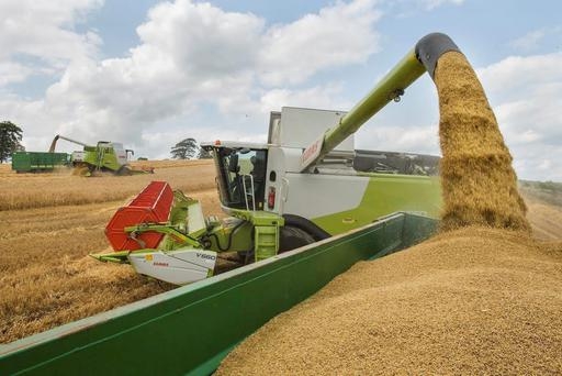 Farmers are being offered a harvest price of €115/t for their barley.