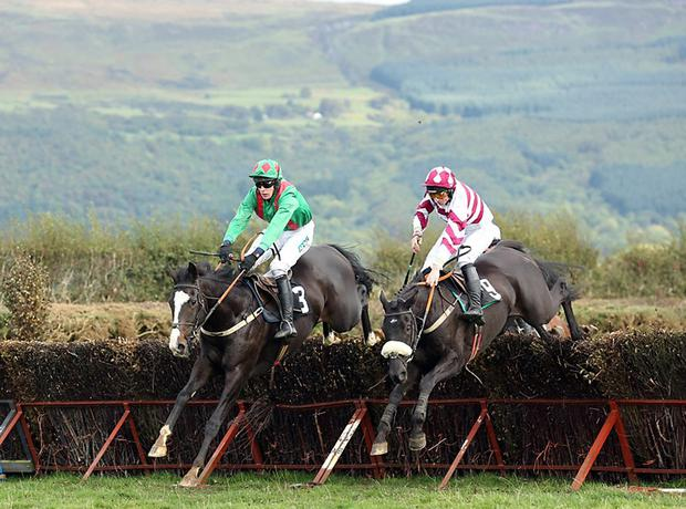 Chosen Dream (on left) has won eight point-topoints and was also successful on his Irish chasing debut at Downpatrick last month.