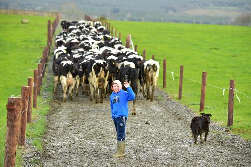 Storms and pests biggest threat to dairy - FarmIreland.ie