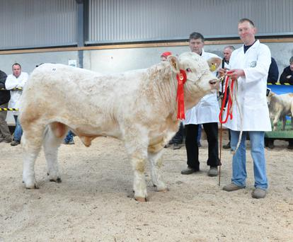 Matt and P J Ryan, Drom, Borrisoleigh, with Kilvilcorris Lewis, winner of the class for bulls born March 15 - April 18, 2015, sold for €3,700, one of four bulls from the herd which sold for a total of €15,150.