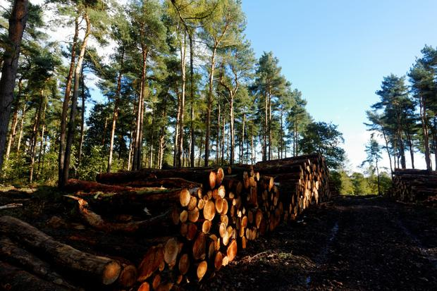 Forestry can help slow down water run-off.