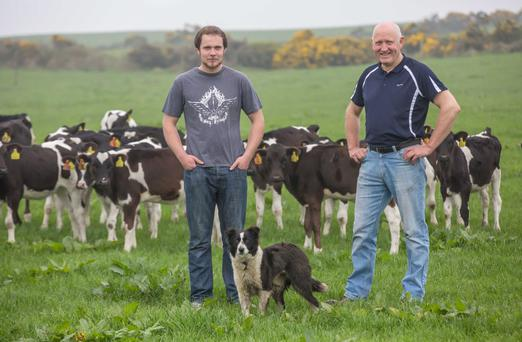 Tommy and Adam Cooke check on the calves with Heidi the dog and (right) in the milking parlour. Photo: Pat Moore.