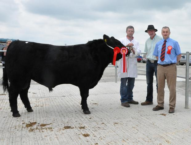 Champion of the show at the Munster Branch, Irish Angus Society Sale at Kilmallock on Saturday, Ryans Luke, with Ger Ryan, Ballyhooley, Cork, breeder/exhibitor; John Murphy, Munster branch chairman, and Michael O'Connor, judge.