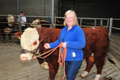 Eva Holmes Jenkinstown with hereford pedigree bull which was later sold for €2,750.