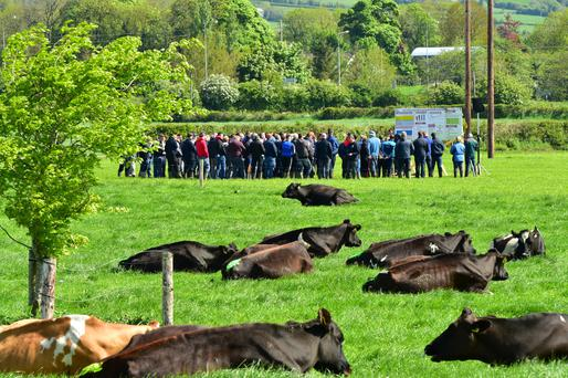 Over 1,000 farmers attended Teagasc Greenfield farm open day in Kilkenny. Photo: Roger Jones.