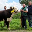 Kye Hulk 706, which sold for €5,000, is pictured with purchaser James Thompson, owner Padraig McGrath and James Thompson Junior.