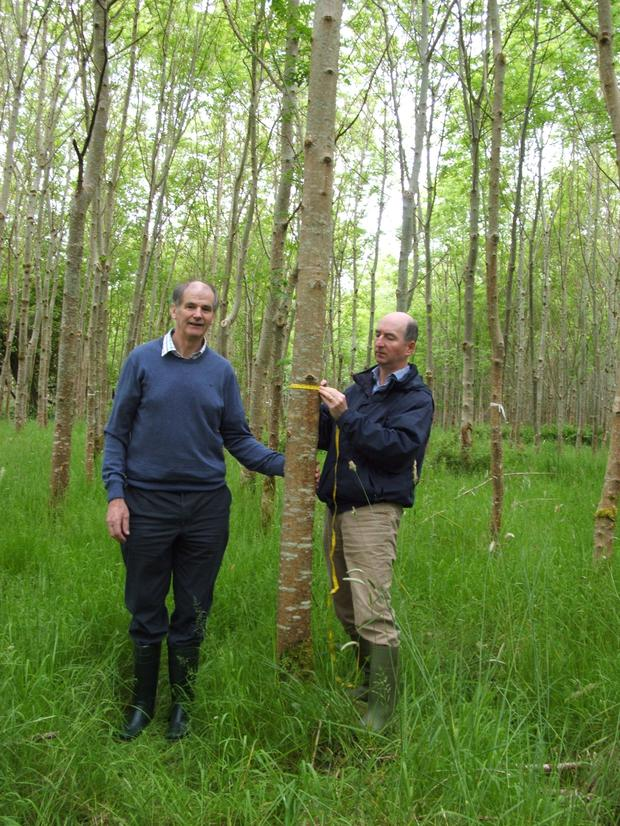 Noel Kennedy, Forestry Adviser with Teagasc assesses Christy Tighe's ash in preparation for a first thinning operation