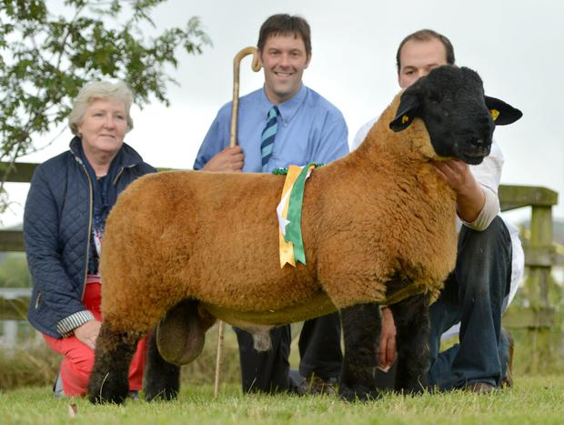 Sheila Eggleston President Suffolk Sheep Breeders, Melvin Stuart, Judge and Patrick O' Keeffe with the Roscrea Champion 2014 exhibited by Arthur O' Keeffe.