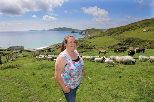 Niamh Ferriter of Cummenole on the Dingle Peninsula keeps limosine sucklers and succesfully lambed 120 ewes in April this year. Photo: Valerie O'Sullivan