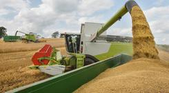 Ninety per cent of cereal farmers are not breaking even on their crops.