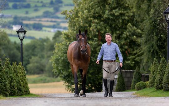 Greg Broderick pictured at his stud farm in Tipperary with MHS Going Global. Photo: Dylan Moran.