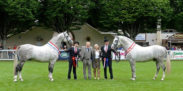 Jimmy and Edel Quinn (centre) with their 2015 Irish Draught champion Cappa Cassanova (on left, shown by Seamus Sloyan) and reserve champion Cappa Aristocrat, shown by John Keane