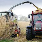 Ireland must support the growing of bio-energy crops such as Miscanthus