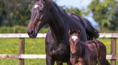 Ringworm is the most common skin irritation in horse herds in this country.