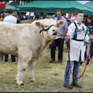 Shane Hynes from Athlone competing with his Charolais bull at the Tullamore Show in Offaly. Photo: Steve Humphreys