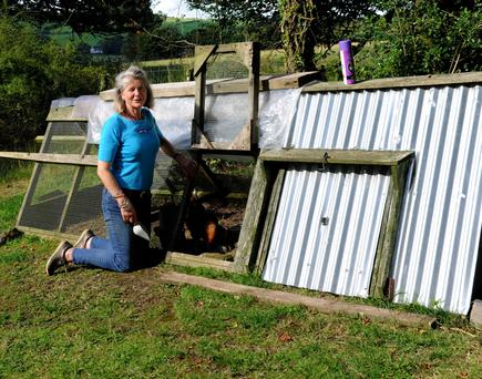 Verity Butterfield, Collinstown has had chickens and other fowl killed by pine martins. Photo: John McAuley.