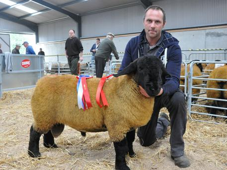 John Hanly, Horse and Jockey with the Overall Champion of the show and highest price ram at the sale.