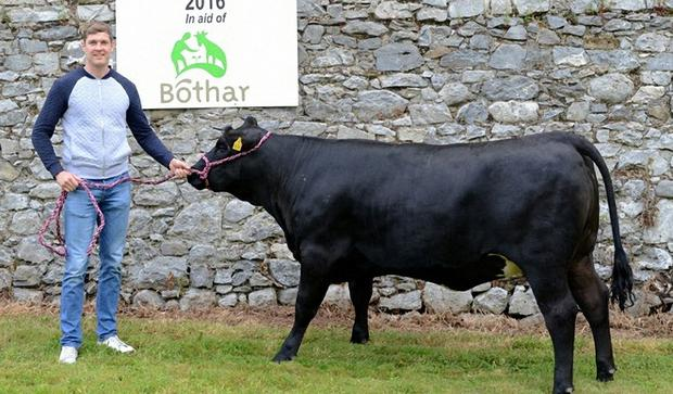 Tipperary ace Seamus Callinan pictured with one of the heifers that will be auctioned at the Ploughing in aid third world charity Bothar