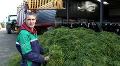 Tim Mannion's herd of cows will be on show in a robotic milking display at the Lely stand