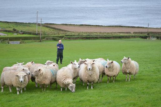 Michael Duffy has had to change the feeding strategy for his sheep by housing them