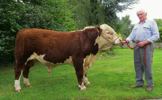 Val Ledwith with 'Rathregan Boyo' born July 2015 and weighed 625kg at 12 months.