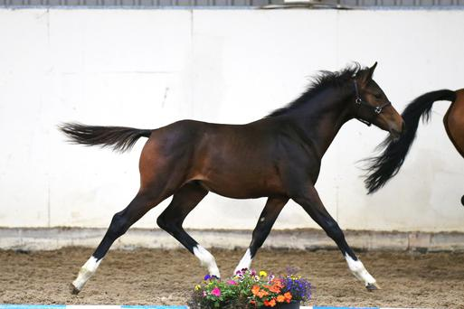 John McKibbin's colt by Connor was purchased at Barnadown by Kieran Kennedy for €15,000