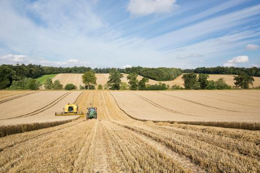 Arable land at Harrietfield, with a rotational farming system of winter wheat, winter oats, spring barley and oil seed rape, selling in lots or as a whole for €7,500/ac