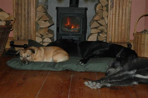 Dogs enjoy the warmth of the stove