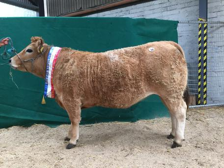 Overall Champion of Show, Cullenwaine Khaleesi exhibited by Donal Quinlan, Cloughjordan, Co. Tipperary and sold for €3000