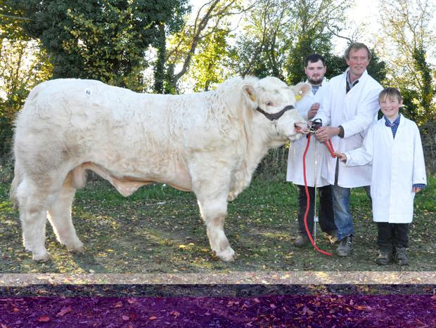 Graham Gallagher, Alan Wood, his son, Nigel and 'Crossmolina Logan' the top price bull at the Irish Charolais Society Show and Sale at Tullamore sold for €7,000