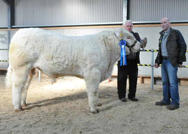 James Phelan, Garryhill, Bagenalstown with his Reserve Champion, Looby Larson, and show judge, Pat McClean