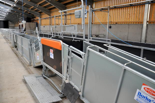 A combi clamp aids the management of the sheep for dosing and inspection purposes