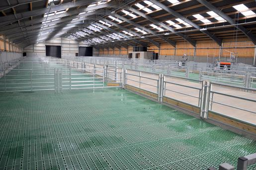 Pics New 1m Sheep Housing Facility Has Space For Over