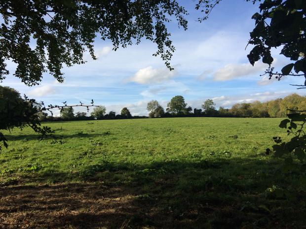 Tillage and grazing farm for sale at Mullaghroe near Slane, Co Meath