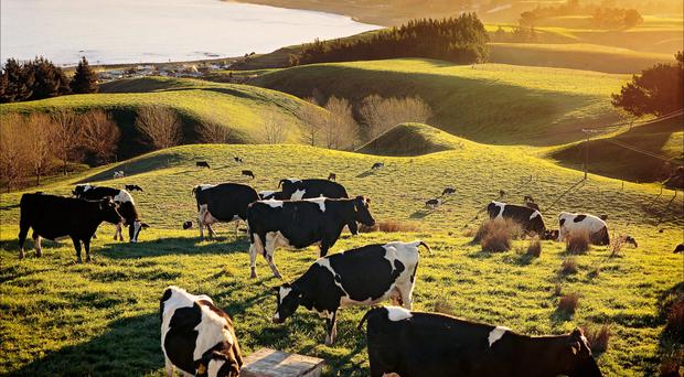 Weather impacts on New Zealand milk production