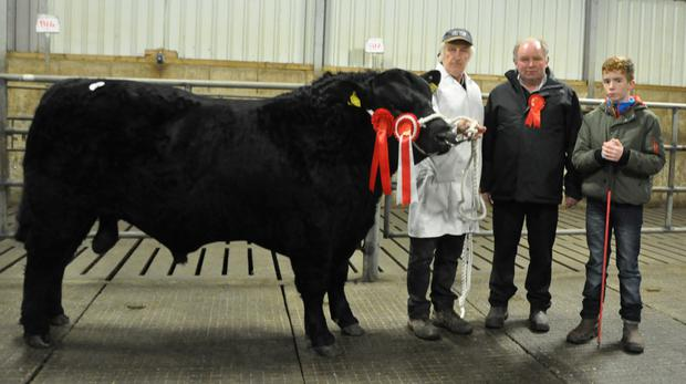 Denis Twomey, Farran, Causeway, Co Kerry with Tubridmore Mark, champion bull at the Munster Branch, Irish Angus Show and Sale at Kilmallock; show judge Michael Horan and Shane Gaynor