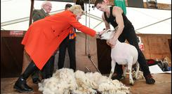 President Michael D. Higgins and his wife Sabina pictured with All Ireland Sheep Shearing Champion Ivan Scott from Donegal at this year's National Ploughing Championships. Photo: Steve Humpheys