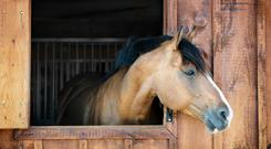Many of the same principles used in farm partnerships can be applied to the equine sector
