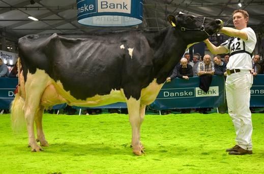 Philip Jones from Hallow Holsteins in Wexford with his eight year-old Holstein champion and overall show interbreed champion at the RUAS WInter Fair