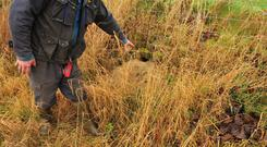 A Carlow tillage farmer found rats among his bird cover crops